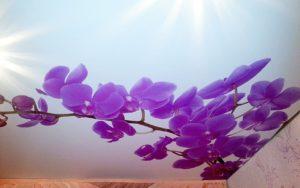 Натяжной потолок с фотопечатью синие цветы